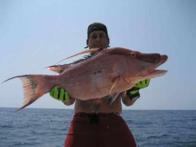 Florida Keys Fish Database
